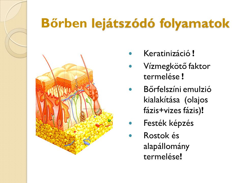 lejátszódó folyamatok Bőrben lejátszódó folyamatok Keratinizáció ! Vízmegkötő faktor termelése ! Bőrfelszíni emulzió kialakítása (olajos fázis+vizes f