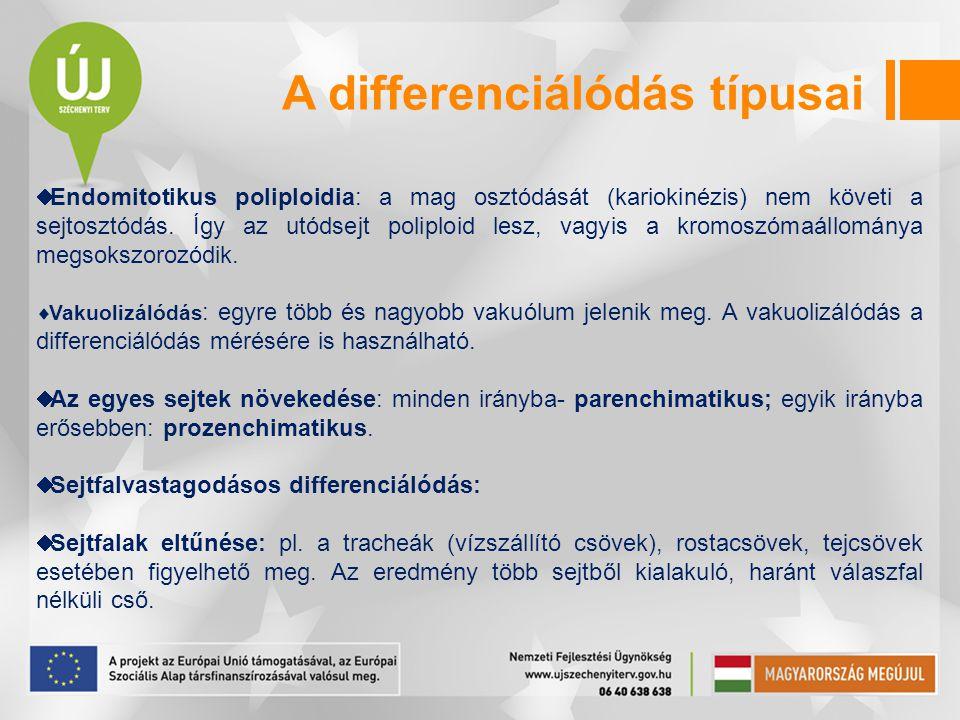  Endomitotikus poliploidia: a mag osztódását (kariokinézis) nem követi a sejtosztódás. Így az utódsejt poliploid lesz, vagyis a kromoszómaállománya m