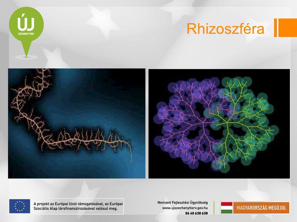 Rhizoszféra