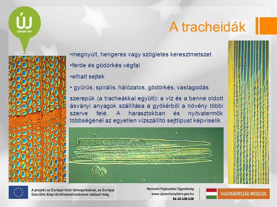 megnyúlt, hengeres vagy szögletes keresztmetszet ferde és gödörkés végfal elhalt sejtek gyűrűs, spirális, hálózatos, gödörkés, vastagodás szerepük (a