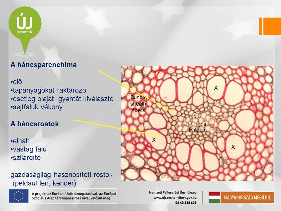A háncsparenchima élő tápanyagokat raktározó esetleg olajat, gyantát kiválasztó sejtfaluk vékony A háncsrostok elhalt vastag falú szilárdító gazdasági