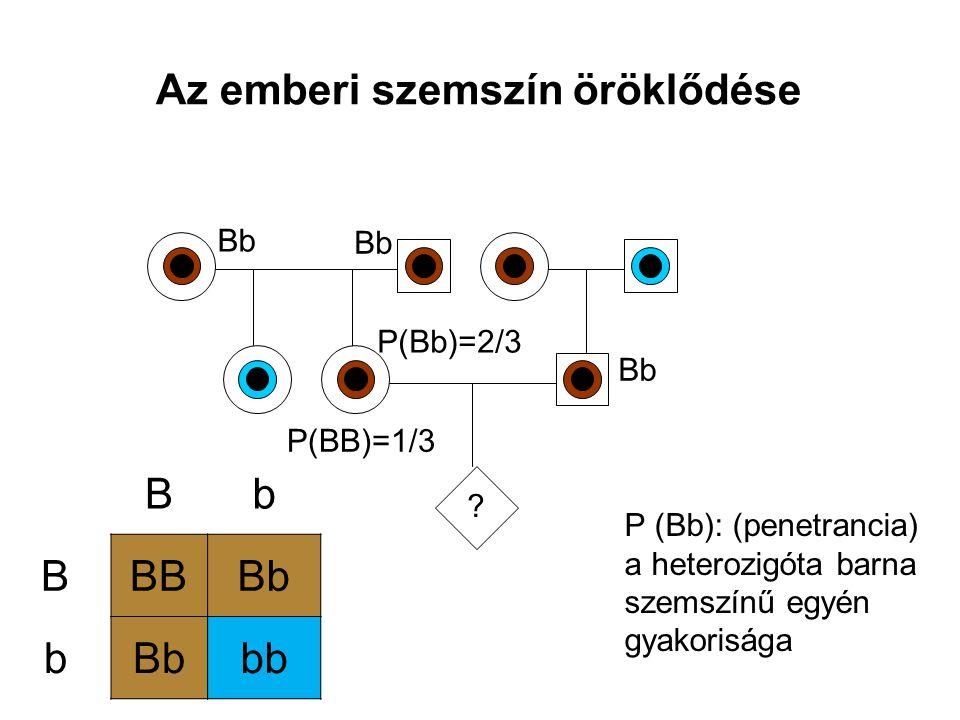 Az emberi szemszín öröklődése ? Bb P(BB)=1/3 Bb P(Bb)=2/3 Bb BBBBb b bb P (Bb): (penetrancia) a heterozigóta barna szemszínű egyén gyakorisága