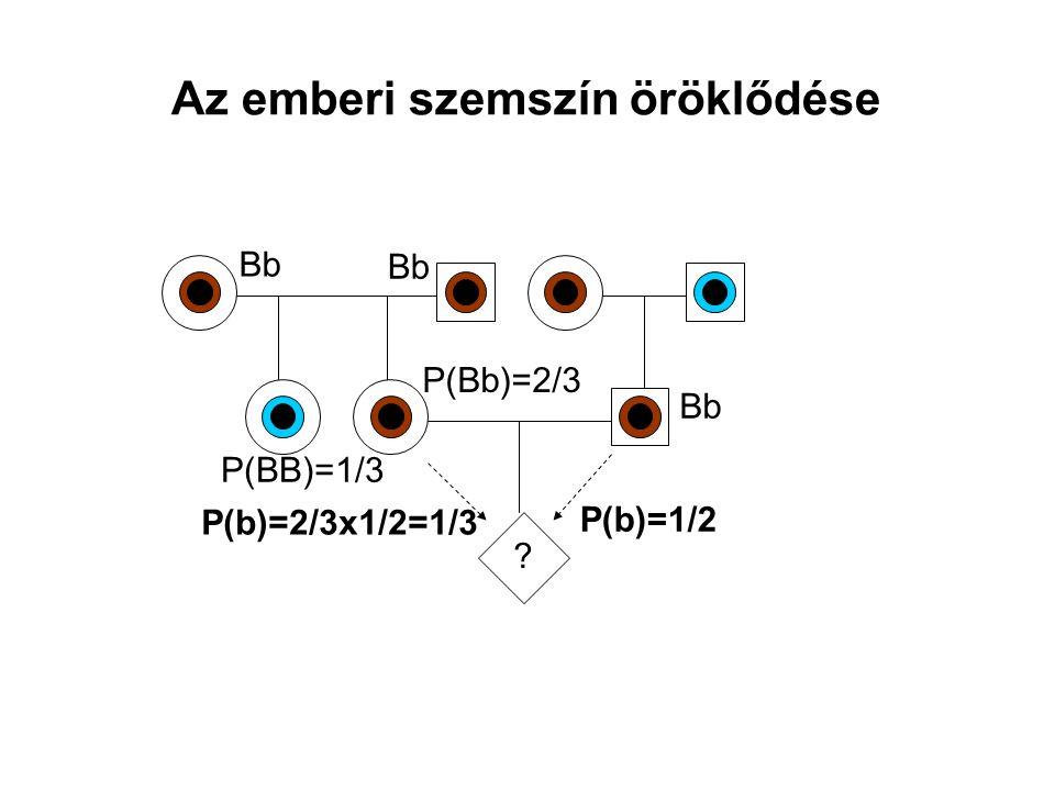Az emberi szemszín öröklődése ? Bb P(BB)=1/3 Bb P(Bb)=2/3 P(b)=2/3x1/2=1/3 P(b)=1/2