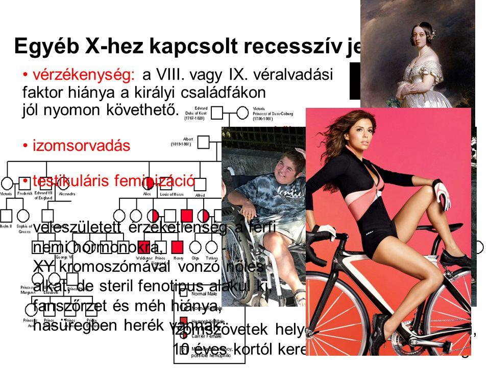 Egyéb X-hez kapcsolt recesszív jellegek vérzékenység: a VIII. vagy IX. véralvadási faktor hiánya a királyi családfákon jól nyomon követhető. izomsorva