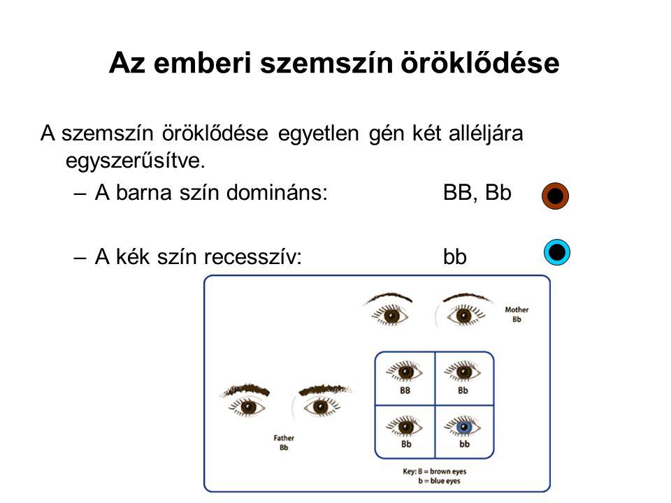 A szemszín öröklődése egyetlen gén két alléljára egyszerűsítve. –A barna szín domináns: BB, Bb –A kék szín recesszív: bb Az emberi szemszín öröklődése