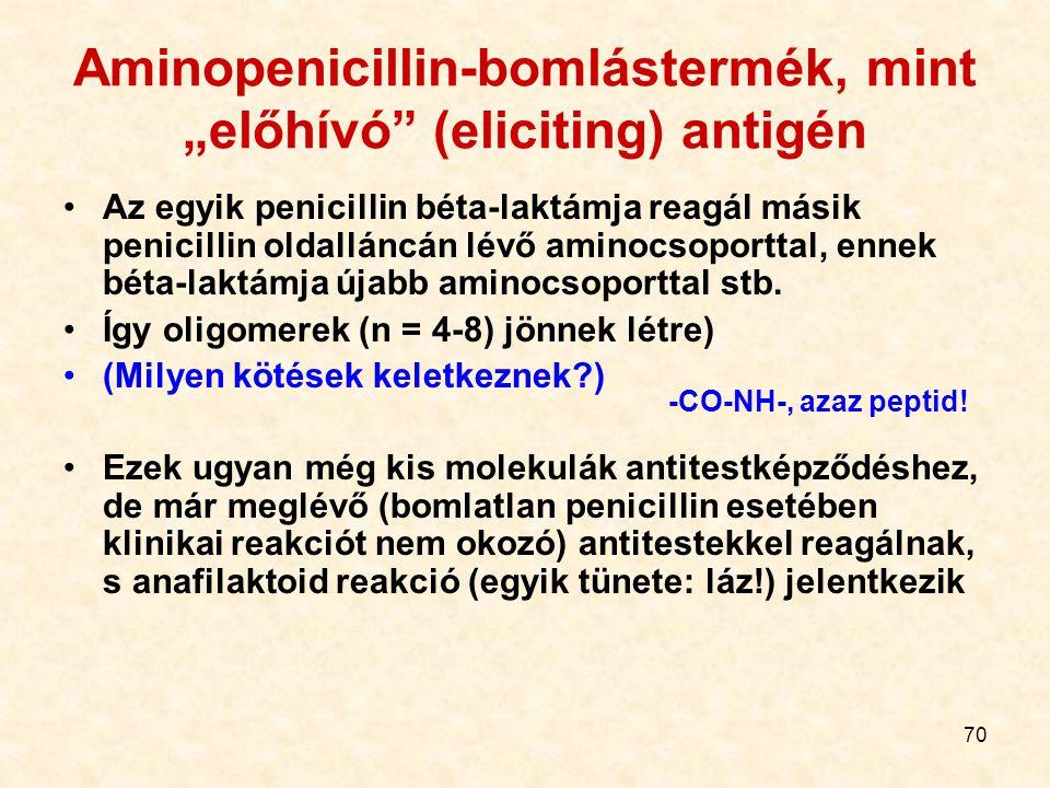 """70 Aminopenicillin-bomlástermék, mint """"előhívó (eliciting) antigén Az egyik penicillin béta-laktámja reagál másik penicillin oldalláncán lévő aminocsoporttal, ennek béta-laktámja újabb aminocsoporttal stb."""
