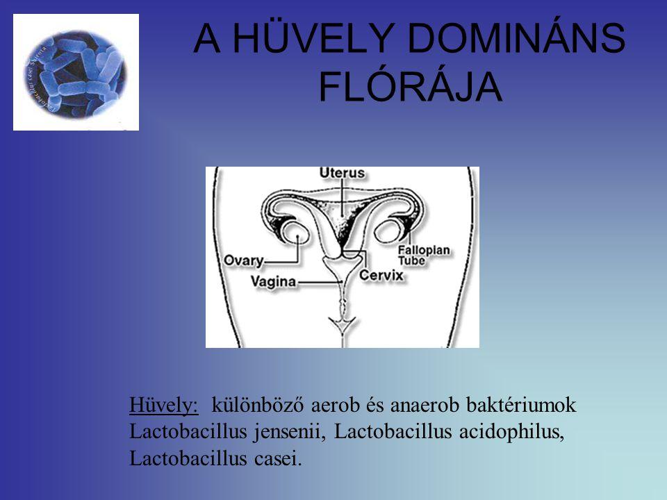 A HÜVELY DOMINÁNS FLÓRÁJA Hüvely: különböző aerob és anaerob baktériumok Lactobacillus jensenii, Lactobacillus acidophilus, Lactobacillus casei.
