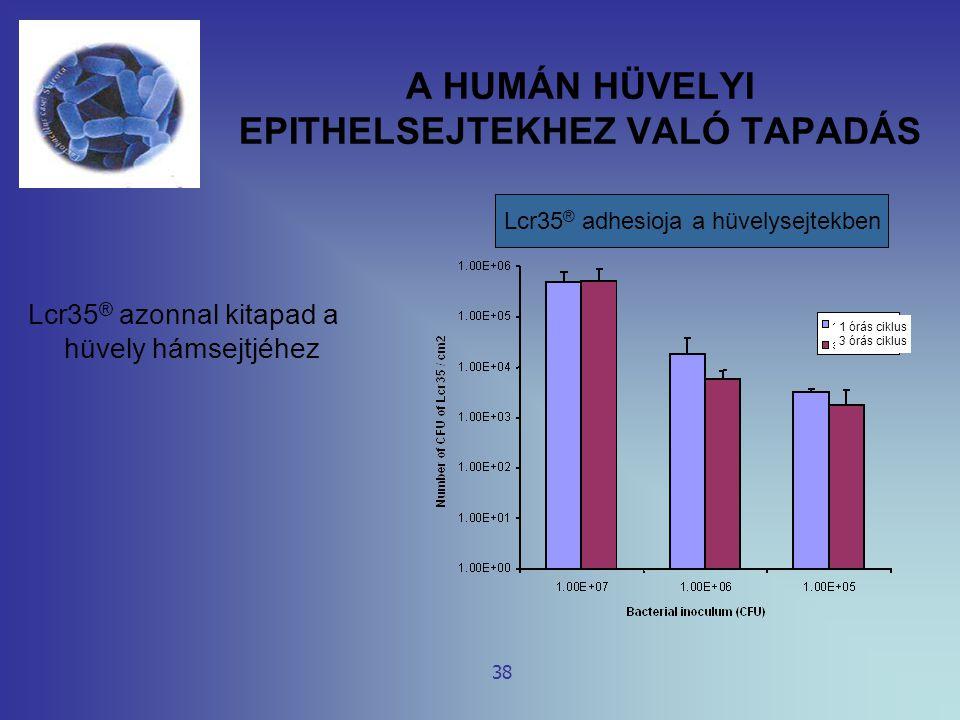 A HUMÁN HÜVELYI EPITHELSEJTEKHEZ VALÓ TAPADÁS Lcr35 ® azonnal kitapad a hüvely hámsejtjéhez 38 Lcr35 ® adhesioja a hüvelysejtekben 1 órás ciklus 3 órá