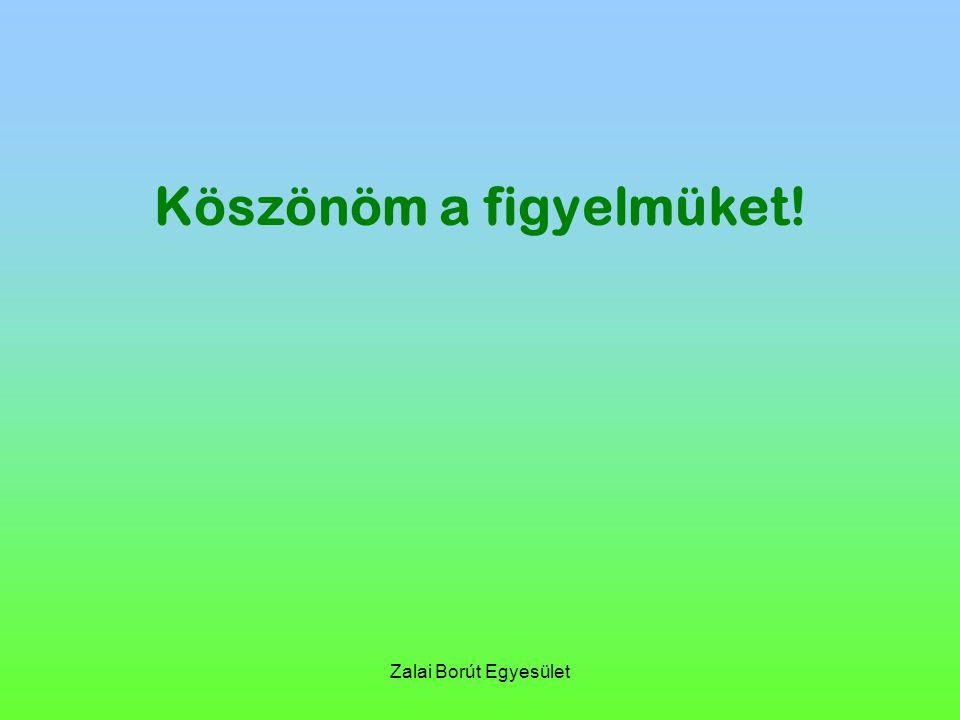 Zalai Borút Egyesület Köszönöm a figyelmüket!