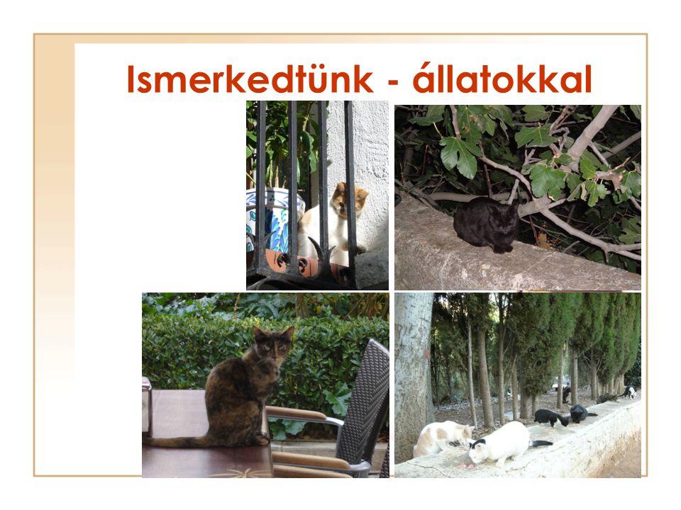 Ismerkedtünk - állatokkal