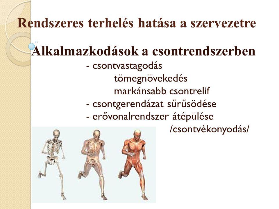 Rendszeres terhelés hatása a szervezetre Alkalmazkodások a csontrendszerben - csontvastagodás tömegnövekedés markánsabb csontrelif - csontgerendázat s
