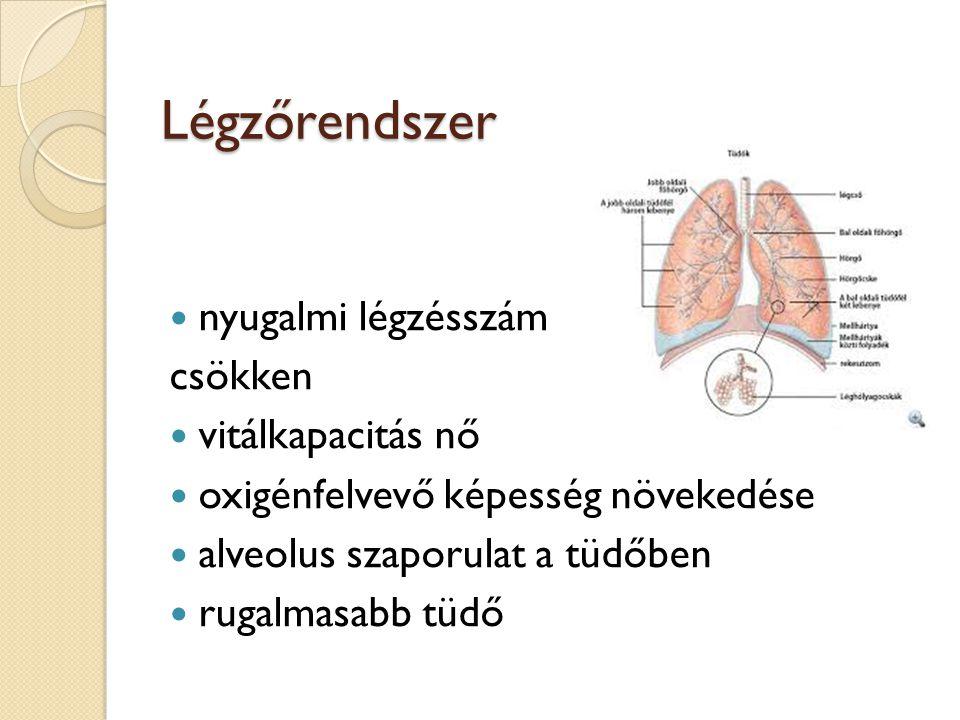 Légzőrendszer nyugalmi légzésszám csökken vitálkapacitás nő oxigénfelvevő képesség növekedése alveolus szaporulat a tüdőben rugalmasabb tüdő
