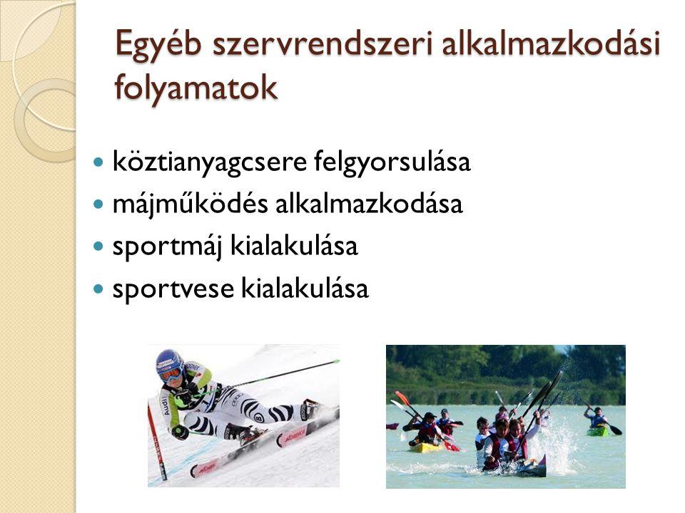 Egyéb szervrendszeri alkalmazkodási folyamatok köztianyagcsere felgyorsulása májműködés alkalmazkodása sportmáj kialakulása sportvese kialakulása