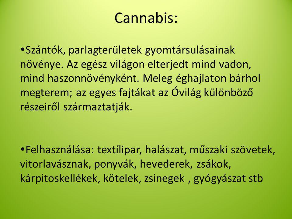 Cannabis:  Szántók, parlagterületek gyomtársulásainak növénye.