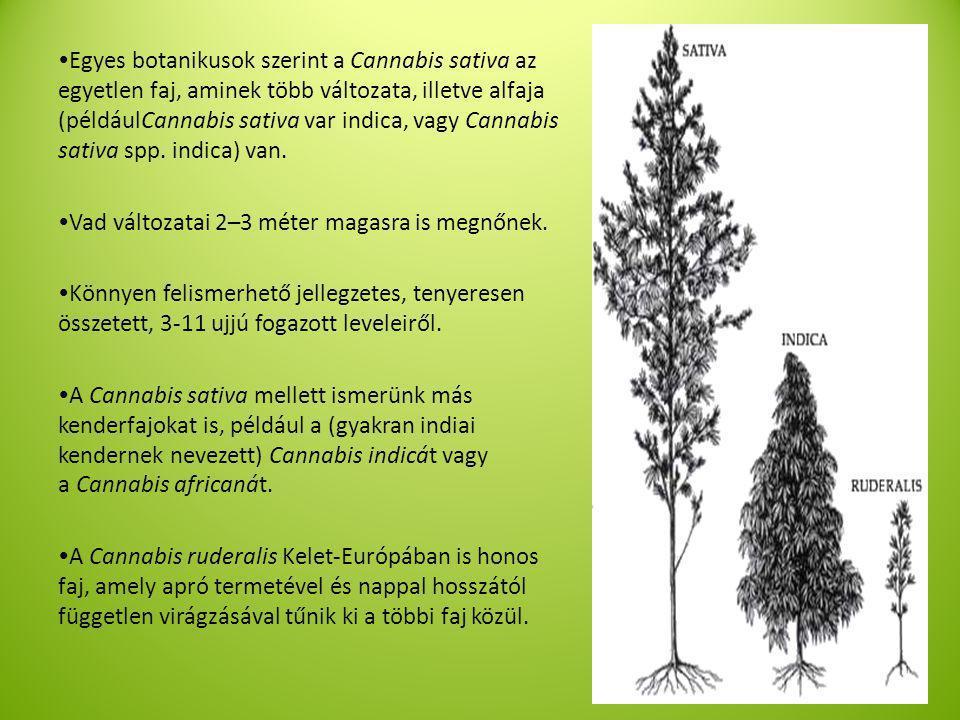  Egyes botanikusok szerint a Cannabis sativa az egyetlen faj, aminek több változata, illetve alfaja (példáulCannabis sativa var indica, vagy Cannabis sativa spp.