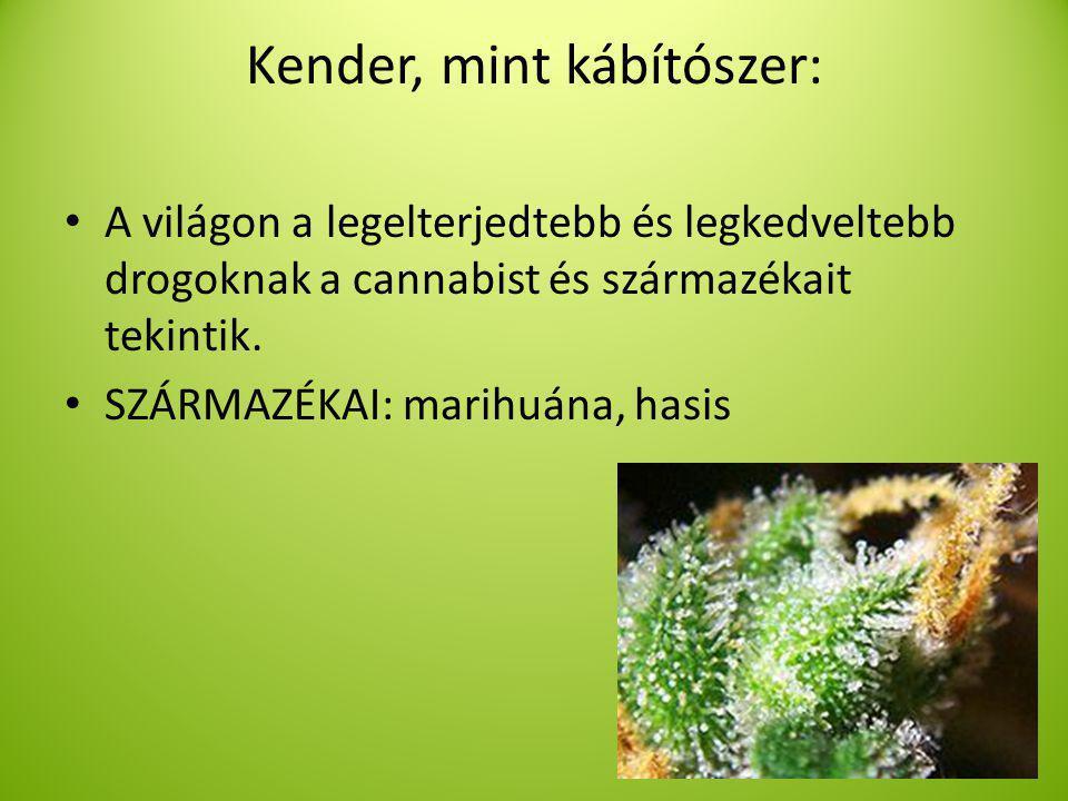 Kender, mint kábítószer: A világon a legelterjedtebb és legkedveltebb drogoknak a cannabist és származékait tekintik.
