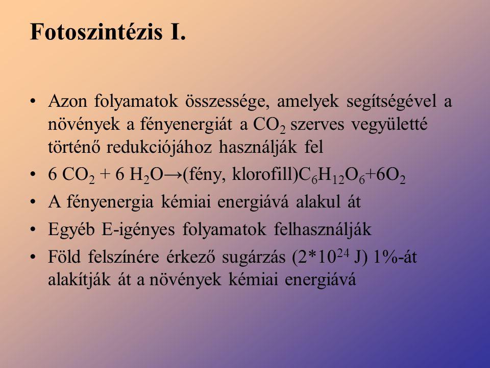 Fotoszintézis I. Azon folyamatok összessége, amelyek segítségével a növények a fényenergiát a CO 2 szerves vegyületté történő redukciójához használják