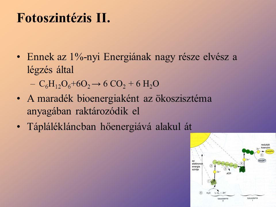 Fotoszintézis II. Ennek az 1%-nyi Energiának nagy része elvész a légzés által –C 6 H 12 O 6 +6O 2 → 6 CO 2 + 6 H 2 O A maradék bioenergiaként az ökosz