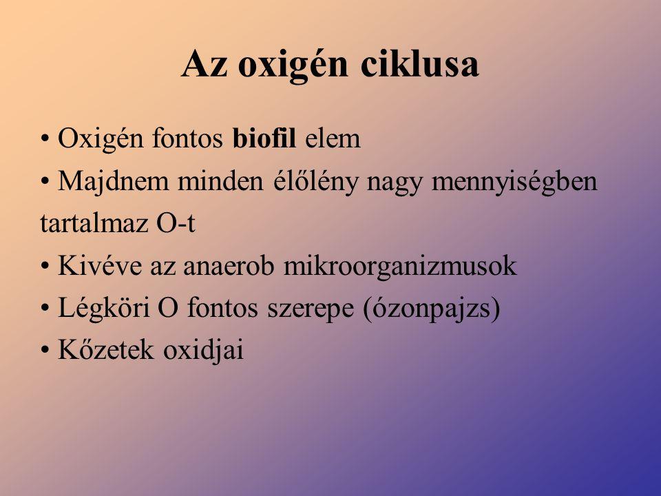 Az oxigén ciklusa Oxigén fontos biofil elem Majdnem minden élőlény nagy mennyiségben tartalmaz O-t Kivéve az anaerob mikroorganizmusok Légköri O fonto