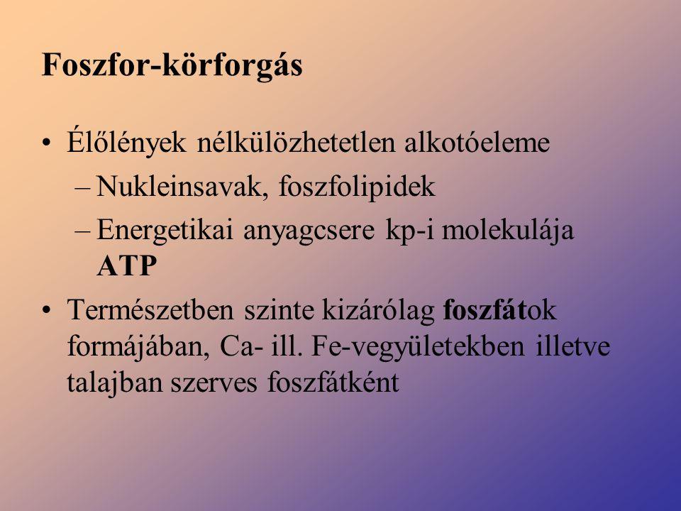 Foszfor-körforgás Élőlények nélkülözhetetlen alkotóeleme –Nukleinsavak, foszfolipidek –Energetikai anyagcsere kp-i molekulája ATP Természetben szinte