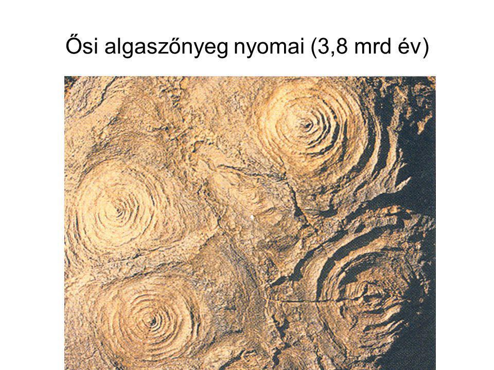 Ősi algaszőnyeg nyomai (3,8 mrd év)