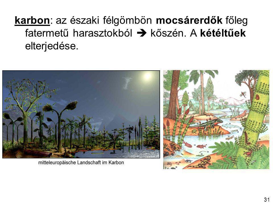 31 karbon: az északi félgömbön mocsárerdők főleg fatermetű harasztokból  kőszén.