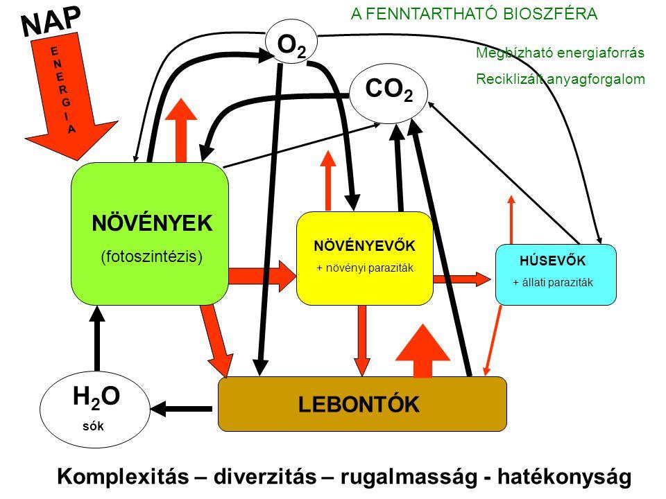 """Az ember előtti bioszféra - A bioszféra a nagy földi rendszer növekvő alrendszere; - Földünk történetének 99,99%-a ember nélküli; - A bioszféra az élővilág diverzitásával evolválódott, ökológiai szerveződésével szabályozódott; - """"Fenntarthatóan fejlődött ."""