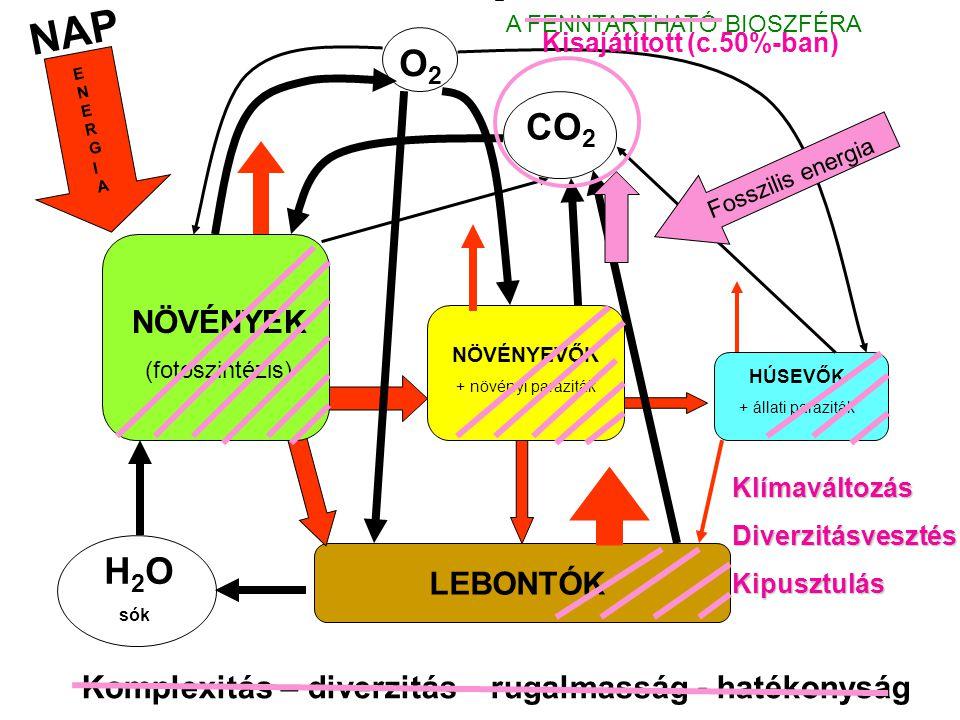 NAP NÖVÉNYEK (fotoszintézis) NÖVÉNYEVŐK + növényi paraziták HÚSEVŐK + állati paraziták LEBONTÓK H 2 O sók CO 2 O2O2 ENERGIAENERGIA Komplexitás – diverzitás – rugalmasság - hatékonyság A FENNTARTHATÓ BIOSZFÉRA Megbízható energiaforrás Reciklizált anyagforgalom