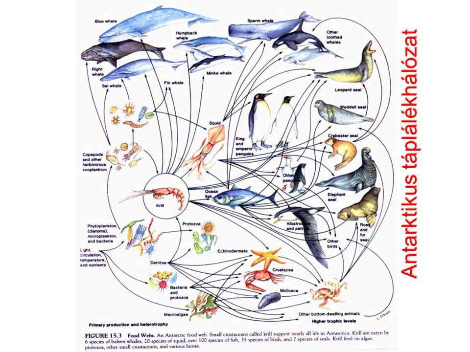 NAP NÖVÉNYEK (fotoszintézis) NÖVÉNYEVŐK + növényi paraziták HÚSEVŐK + állati paraziták LEBONTÓK H 2 O sók CO 2 O2O2 ENERGIAENERGIA Komplexitás – diverzitás – rugalmasság - hatékonyság A FENNTARTHATÓ BIOSZFÉRA Fosszilis energia KlímaváltozásDiverzitásvesztésKipusztulás Kisajátított (c.50%-ban)