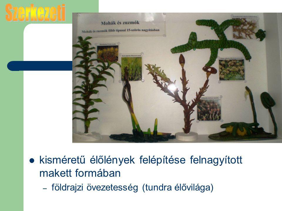 kisméretű élőlények felépítése felnagyított makett formában – földrajzi övezetesség (tundra élővilága)