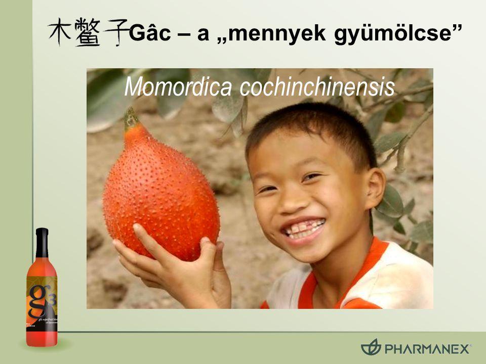 """Gâc – a """"mennyek gyümölcse Momordica cochinchinensis"""