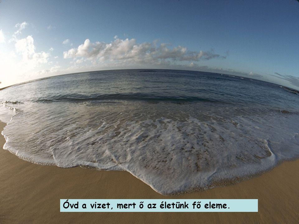Óvd a vizet, mert ő az életünk fő eleme.
