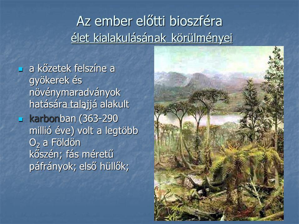 Az ember előtti bioszféra élet kialakulásának körülményei a kőzetek felszíne a gyökerek és növénymaradványok hatására talajjá alakult a kőzetek felszí