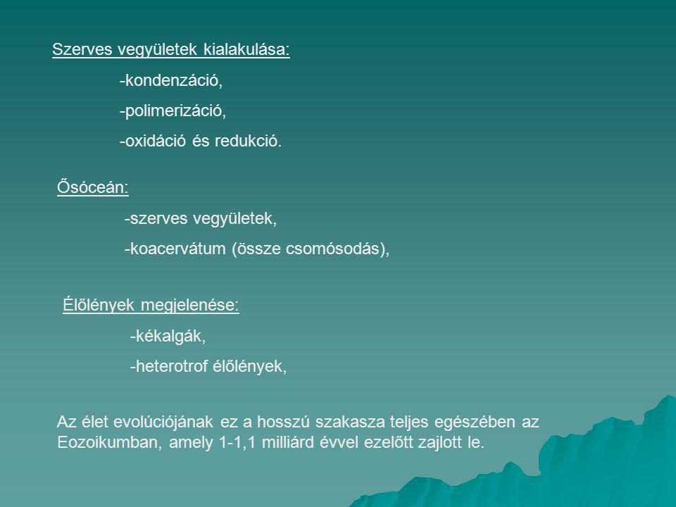 Szerves vegyületek kialakulása: -kondenzáció, -polimerizáció, -oxidáció és redukció. Ősóceán: -szerves vegyületek, -koacervátum (össze csomósodás), Él