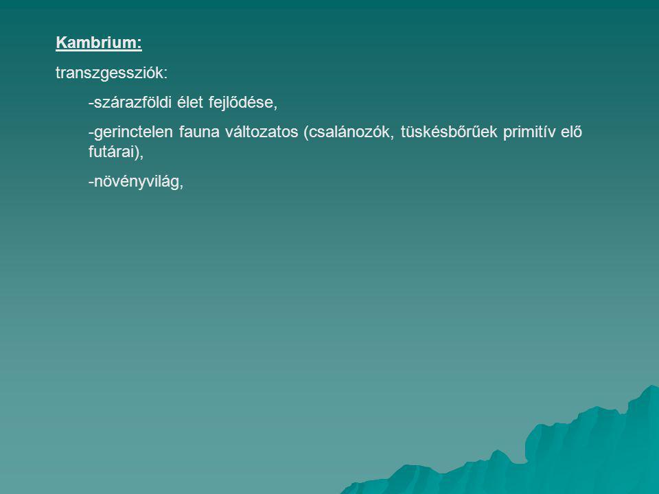 Szilur: -jelentéktelen orogenetikus mozgás választja el a kambriumot az alsó szilurtól (ordovicum), -Éghajlat változás nincs, -gerinctelenek lassan variálódnak (négytengelyű kovaszivacs), -első gerincesek (páncélos halak), -másodrendű takoni hegység képződés (Szibéria), ami a felső szilurt (gotlandium) jelenti, -szárazföld meghódítása, -állatvilág (korallok, trilobiták), -izeltlábúak (kagylós rákok), -növényvilág, -éghajlat hűvösebbé vált, éghajlati övek eltolódás.