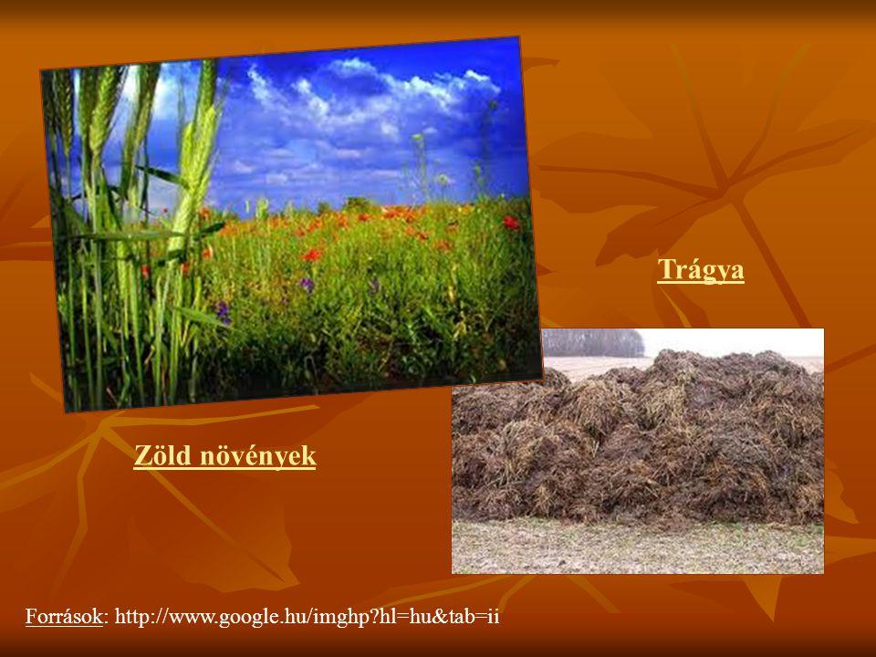Zöld növények Trágya Források: http://www.google.hu/imghp?hl=hu&tab=ii