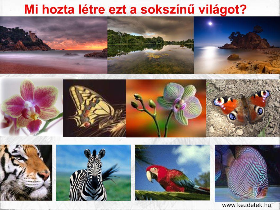 Mi hozta létre ezt a sokszínű világot? www.kezdetek.hu