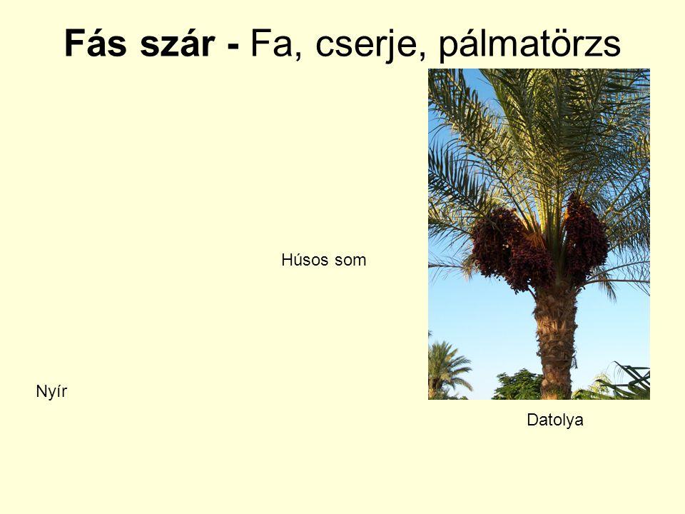 Fás szár - Fa, cserje, pálmatörzs Nyír Húsos som Datolya