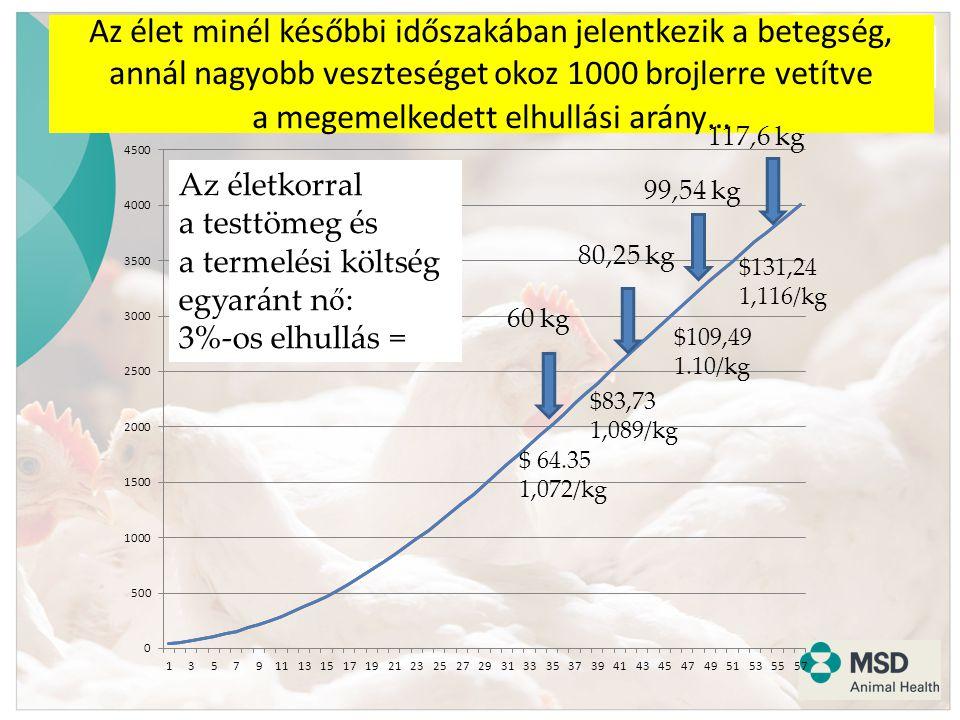 The Convenience of Process and Performance Improvement Az élet minél későbbi időszakában jelentkezik a betegség, annál nagyobb veszteséget okoz 1000 brojlerre vetítve a megemelkedett elhullási arány… $ 64.35 1,072/kg $83,73 1,089/kg $109,49 1.10/kg $131,24 1,116/kg 80,25 kg 99,54 kg 117,6 kg Az életkorral a testtömeg és a termelési költség egyaránt n ő : 3%-os elhullás =