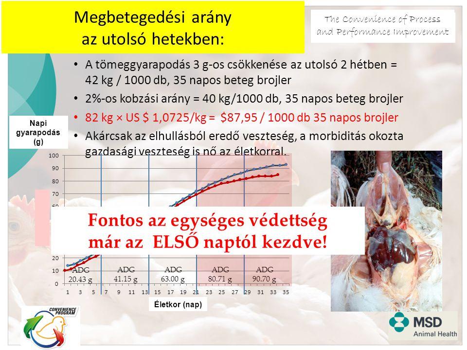 The Convenience of Process and Performance Improvement Megbetegedési arány az utolsó hetekben: A tömeggyarapodás 3 g-os csökkenése az utolsó 2 hétben = 42 kg / 1000 db, 35 napos beteg brojler 2%-os kobzási arány = 40 kg/1000 db, 35 napos beteg brojler 82 kg × US $ 1,0725/kg = $87,95 / 1000 db 35 napos brojler Akárcsak az elhullásból eredő veszteség, a morbiditás okozta gazdasági veszteség is nő az életkorral.