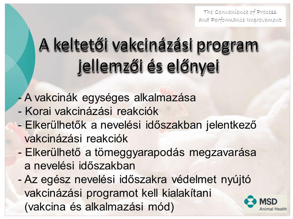 The Convenience of Process and Performance Improvement A keltetői vakcinázási program jellemzői és előnyei - A vakcinák egységes alkalmazása - Korai vakcinázási reakciók - Elkerülhetők a nevelési időszakban jelentkező vakcinázási reakciók - Elkerülhető a tömeggyarapodás megzavarása a nevelési időszakban - Az egész nevelési időszakra védelmet nyújtó vakcinázási programot kell kialakítani (vakcina és alkalmazási mód)