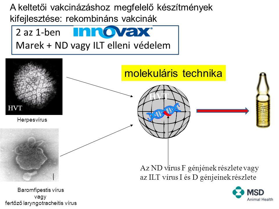 The Convenience of Process and Performance Improvement 2 az 1-ben Marek + ND vagy ILT elleni védelem HVT ILT Az ND vírus F génjének részlete vagy az ILT vírus I és D génjeinek részlete HVT molekuláris technika Herpesvírus Baromfipestis vírus vagy fertőző laryngotracheitis vírus A keltetői vakcinázáshoz megfelelő készítmények kifejlesztése: rekombináns vakcinák