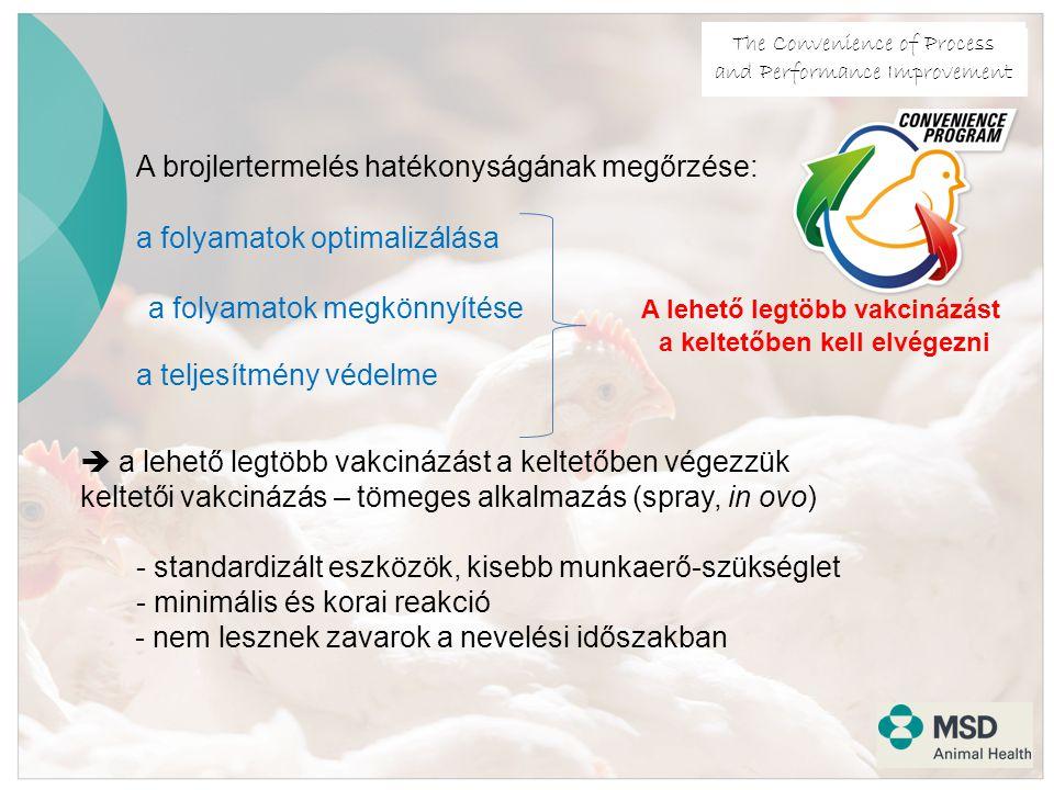 The Convenience of Process and Performance Improvement A brojlertermelés hatékonyságának megőrzése: a folyamatok optimalizálása a folyamatok megkönnyítése A lehető legtöbb vakcinázást a keltetőben kell elvégezni a teljesítmény védelme  a lehető legtöbb vakcinázást a keltetőben végezzük keltetői vakcinázás – tömeges alkalmazás (spray, in ovo) - standardizált eszközök, kisebb munkaerő-szükséglet - minimális és korai reakció - nem lesznek zavarok a nevelési időszakban