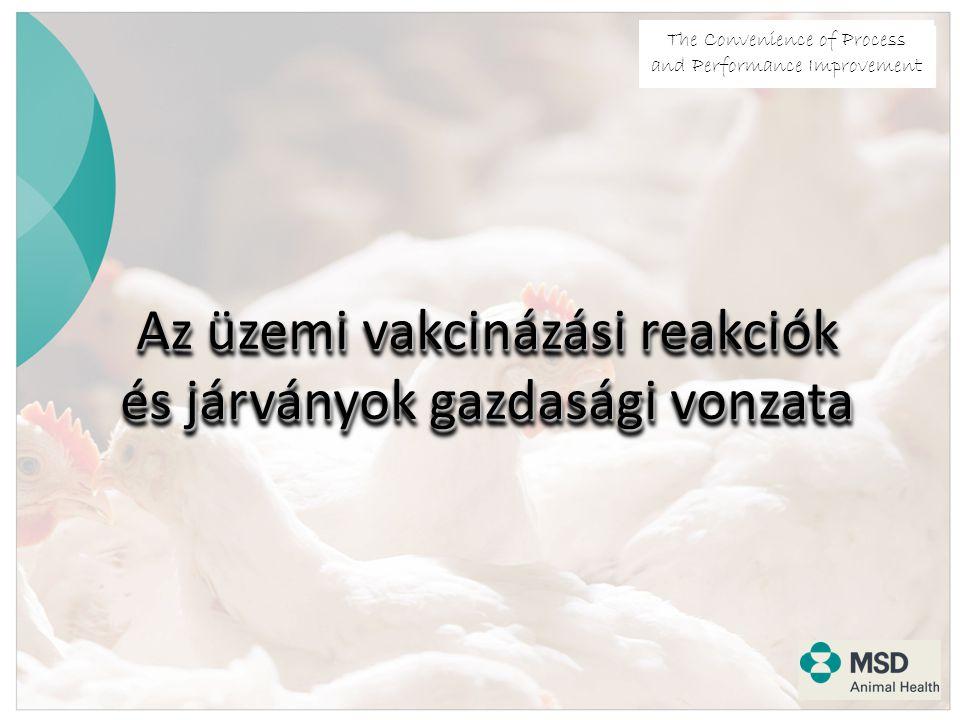 The Convenience of Process and Performance Improvement Az üzemi vakcinázási reakciók és járványok gazdasági vonzata
