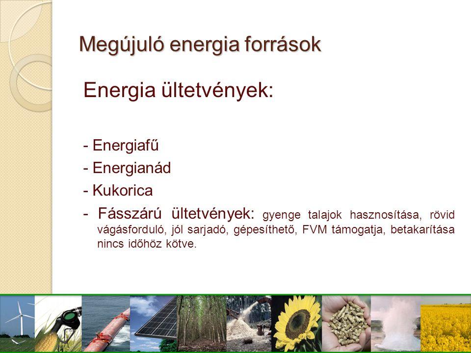 Megújuló energia források Energia ültetvények: - Energiafű - Energianád - Kukorica - Fásszárú ültetvények: gyenge talajok hasznosítása, rövid vágásfor
