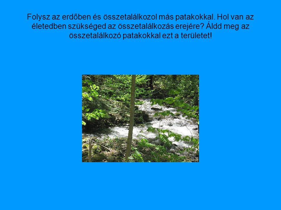 Folysz az erdőben és összetalálkozol más patakokkal.