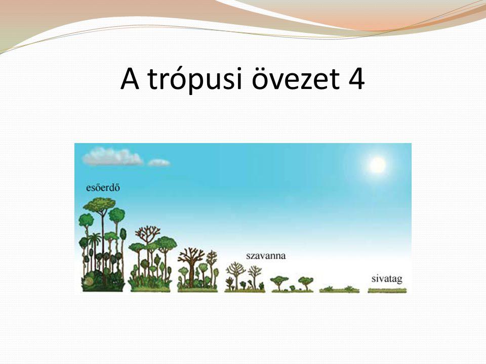 A trópusi övezet 4