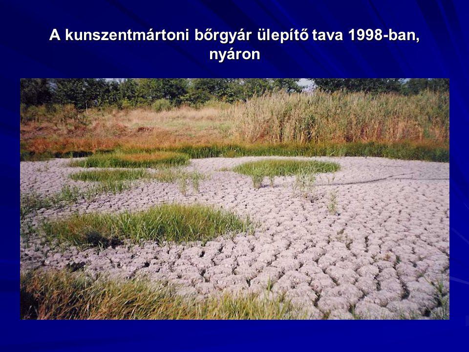 A kunszentmártoni bőrgyár ülepítő tava 1998-ban, nyáron
