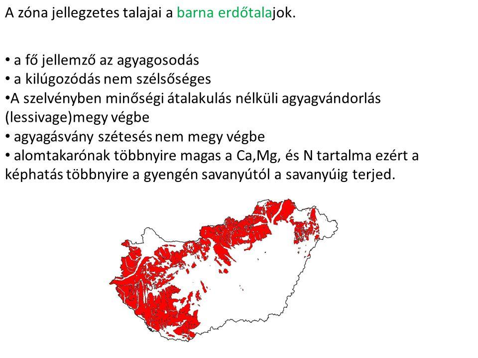 A zóna jellegzetes talajai a barna erdőtalajok.