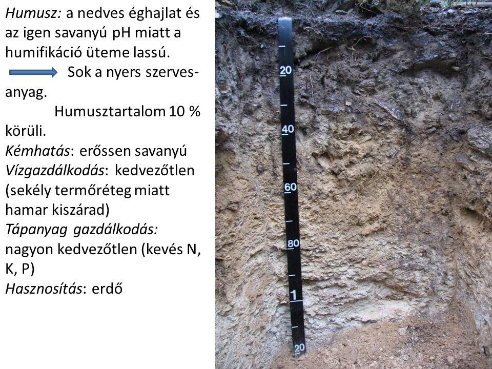 Humusz: a nedves éghajlat és az igen savanyú pH miatt a humifikáció üteme lassú.